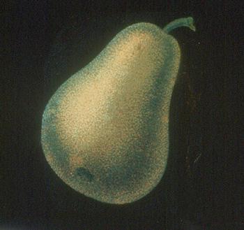vetro lanterna magica (Archivio In Penombra)