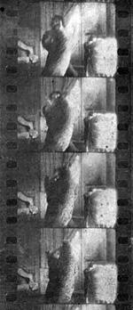 """L'attacco del leopardo, fotogrammi del film """"Il Mistero di Jack Hilton"""" Savoia 1913"""